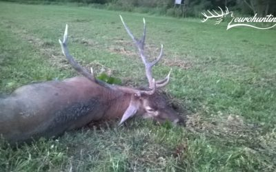 RED STAG PACKAGE IN BELLOWING TIME IN VESZPRÉM COUNTY