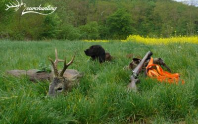 ROE BUCK HUNTING IN SOMOGY COUNTY 1.