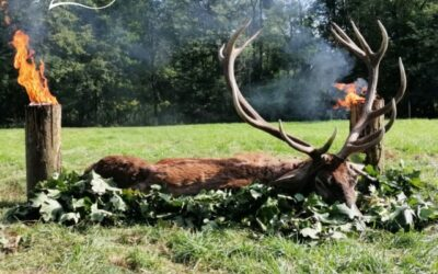 RED STAG HUNTING IN ZALA COUNTY