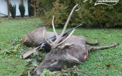 CULL STAG AND HIND HUNTING IN VAS COUNTY