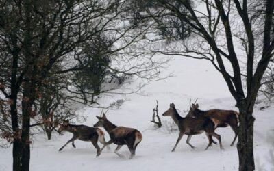 PACKAGE OFFER IN CASE OF SHOOTING FEMALE RED DEER, FALOW DEER AND YEARLING WILD BOAR