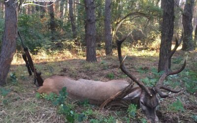 RED STAG PACKAGE IN TOLNA COUNTY